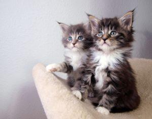 Dierenartsen Leek Kittens